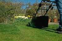 Improve your lawn in 12 weeks | gardenersworld.com