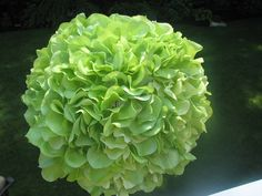 Green hydrangea for  #Green #Bouquet … Wedding ideas for brides, grooms, parents & planners https://itunes.apple.com/us/app/the-gold-wedding-planner/id498112599?ls=1=8 … plus how to organise an entire wedding, within ANY budget ♥ The Gold Wedding Planner iPhone App ♥  http://pinterest.com/groomsandbrides/boards/  For more #Wedding #Ideas & #Budget #Options & #Bridal #Bouquets