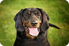 Pictures of Carter a Bloodhound/Black and Tan Coonhound Mix for adoption in Staten Island, NY who needs a loving home.