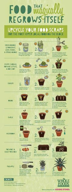 That Magically Regrows Itself from Kitchen Scraps Be sure to upcycle your food scraps. All of this food will magically regrow itself!Be sure to upcycle your food scraps. All of this food will magically regrow itself! Organic Gardening, Gardening Tips, Container Gardening, Organic Farming, Urban Gardening, Indoor Gardening, Gardening Zones, Kitchen Gardening, Indoor Plants