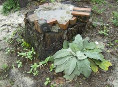 bird bath in a stump, concrete, broken colorful class ,Lambs ear and my baby sunflower sprouts.