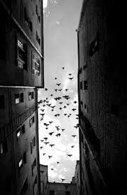Image result for black and white photography