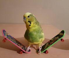 Skateboard king