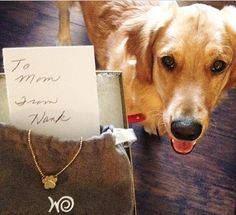 """Loving this #fanphoto of """"Hank"""" giving his mom this special gift - our Little Paw! #alexwoo #littleicons #paw #lovegold #futureheirlooms #mom #mothersday"""