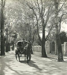 Kifisiá neighborhood, Kifisiá was and still is one of the most expensive northern suburbs of Athens, Greece. Vintage Pictures, Old Pictures, Vintage Images, Old Photos, Greece History, Greece Pictures, Old Greek, Greece Photography, Horse And Buggy