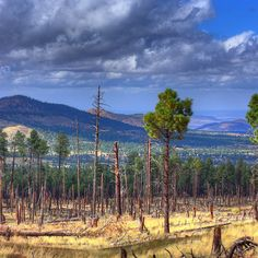 It might not be a state known for its trees, but Arizona might surprise you — 15% of its land is designated as national forest, and Coconino National Forest is at the very heart of it all.