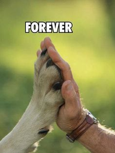 Friend forever.