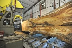 Cutting Koa ~ Hearne Hardwoods Inc.