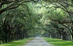 Wormsloe State Park in Savannah, Ga