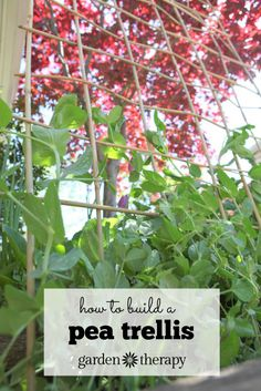 This project shows you how to easily build a bamboo trellis with only one material. Yep, you guessed it...bamboo!