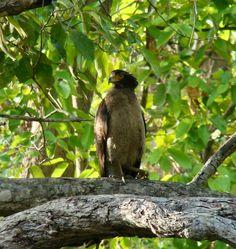 Jim Corbett National Park, Andaman And Nicobar Islands, Bay Of Bengal, Arabian Sea, Birds Of Prey, Bald Eagle, National Parks, India, Vulture