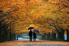 Looks like nyc - central park in the Autumn <33