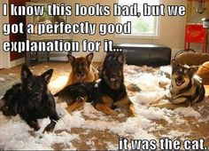 <b>Have you ever wondered what your pets get up to while you're at work?</b> This is what.