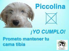 La prometida Dogs, Animals, Bride To Be, I Promise, Animales, Animaux, Pet Dogs, Doggies, Animal
