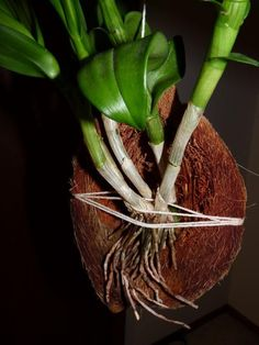 coco husk mount - Google Search