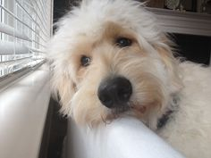 goldendoodle | Sprucing up for Spring {Jack the Goldendoodle Gets a Hair Cut and We ...