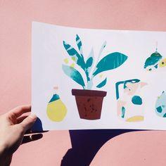 Modern Plant Patterns - Ballasiotes