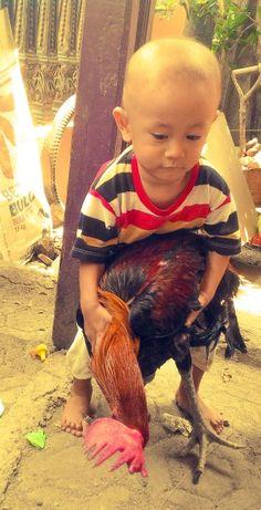Hazqel... tangkap ayam..