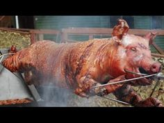 Grilled Pig - Roast Pig at Hotel Cambodiana Event Party | Oktoberfest Cambodia 2014 - YouTube