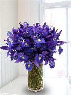 An Iris flower arrangement with blue iris in a glass vase