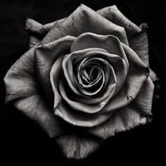 Sans Titre, photography by Fabienne Cresens