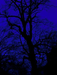 #midnight #blue #sky #tree