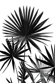 Tropical Furniture, Tropical Home Decor, Tropical Interior, Tropical Colors, Tropical Houses, Fan Palm, Tropical Architecture, Large Beach Towels, White Plants