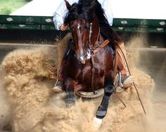 Reining Horse Slide  Don't ride western.. But LOVE the picture!