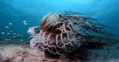Medusa jelly fish