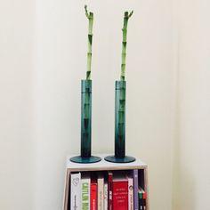 Historia de un bambú