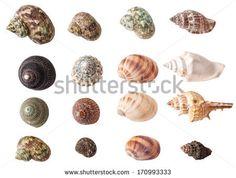 Set of seashells isolated on white background  - stock photo