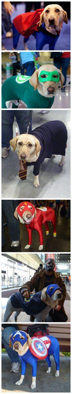 Service dog cosplay