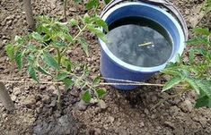 Bucket, Canning, Plant, Lawn And Garden, Home Canning, Buckets, Aquarius, Conservation