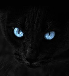 We love a black cat and when they are as mesmerising as this they need to be shared