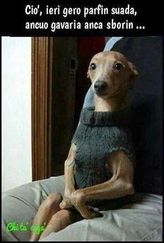 Cane col maglione