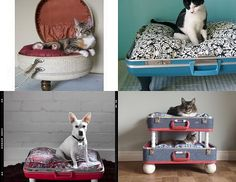 Suitcases used to make dog beds.  Too cute!