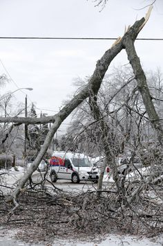 Toronto ice storm Photos show city looking like crime scene with taped-off downed branches Ice Storm, Richmond Hill, Mother Nature, Toronto, This Is Us, Scene, Community, City, Frost