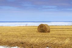 1st day of spring near the tip of the thumb in Michigan. The round bales of hay have spent the winter enjoying the view of Lake Huron during the record freeze of 2013-2014. #farm,#farming,#hay,#bale,