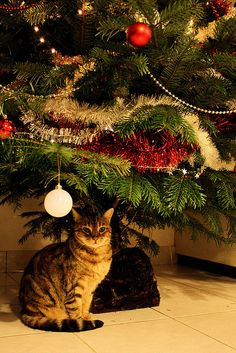 Christmas Cat, reminds me of my cat at Christmas guarding my Christmas presents