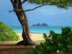 Waimanalo, on Oahu (my favorite beach!)