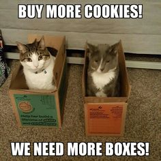 Cats must have more boxes.