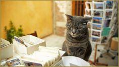 L'un des chats de Luigi Frizzo, de la librairie Acqua Alta, Corte del Tintor, dans le sestier du Castello à Venise.