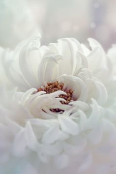 "barbarasangi - tinnacriss: "" White Dahlia by Kristina Manchenko """