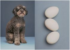 JESS BONHAM Dog Eat Dog for The Gourmand19TH DECEMBER 2016 Jess collaborated with The Gourmand on an A3 calendar of dogs and food in collaboration with Ace Hotel London. Set design by Imogen Frost.