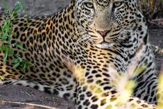 Wildlife photography by Melanie Wildlife Photography, South Africa, Animals, Animales, Animaux, Animal, Animais, Nature Photography