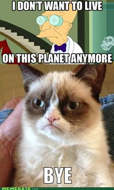 Hell No Kitty .For more humor pics and grumpy kitty visit Grumpy Kitty, Grumpy Baby, Grump Cat, Funny Memes, Funny Quotes, Hilarious Jokes, Funniest Quotes, Hilarious Pictures, Grumpy Quotes