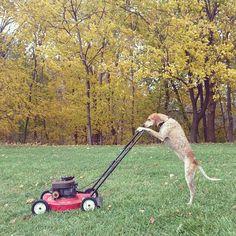 Last mow of the season.