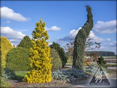 """Iseli Nursery: """"Where the Beauty of Nature Meets the Artistry of Man""""® The home of 12 Months of Color®, Living Art®, Dwarf Conifers and Jack Frost® Maples."""