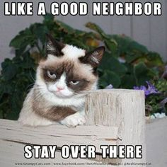 Grumby Cat!