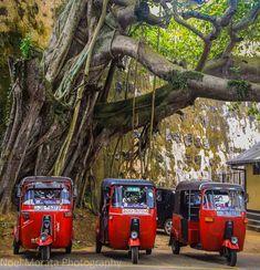 Tuk tuks waiting outside of Galle fort in Sri Lanka   http://travelphotodiscovery.com/sri-lanka-in-full-of-color-travel-photo-mondays/